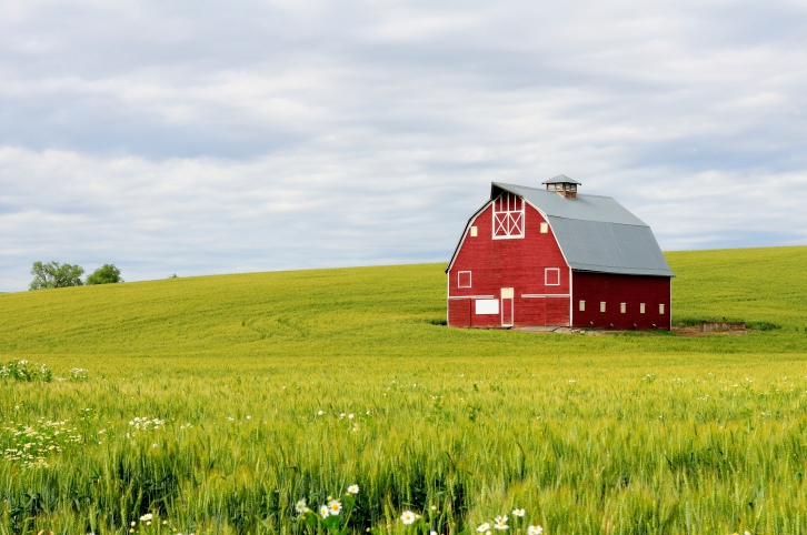image of barn in a field